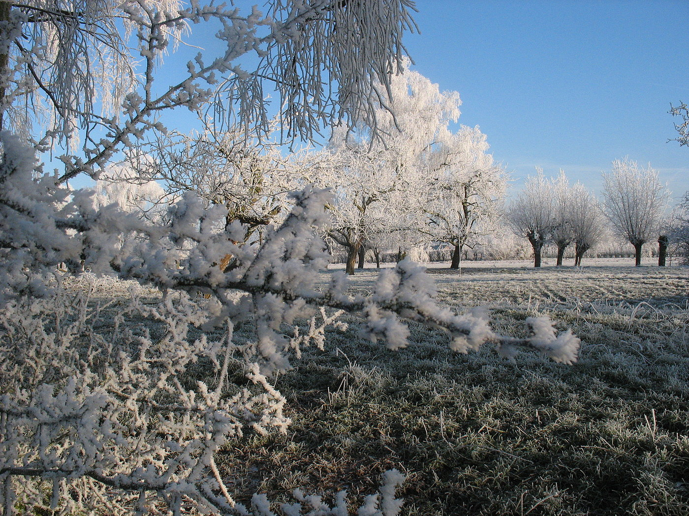 Lopikerhout in de winter